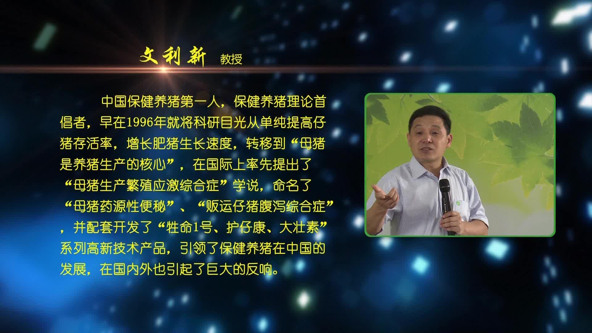 视频:135高效保健养猪技术(文利新教授)