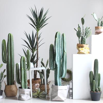 北欧家居仿真绿植仙人柱盆栽沙漠植物服装店商铺造景装饰品摆件