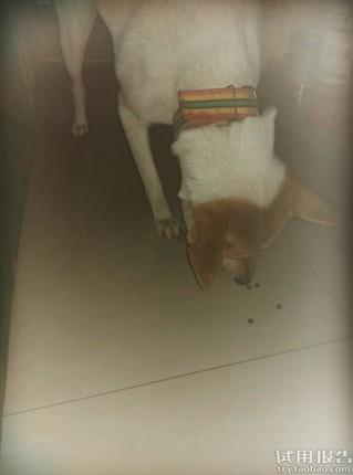 我家小狗从小爱吃狗粮