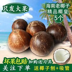 海南热带当季新鲜水果现摘去皮抛光老椰子椰皇椰王5个非毛椰子