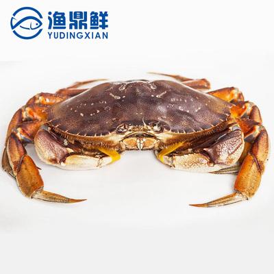 北美进口珍宝蟹800g鲜活面包蟹深海螃蟹黄膏梭子蟹整只顺丰包邮