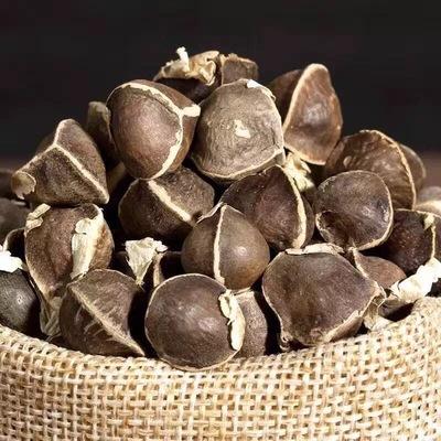 印度辣木籽正品 500克/包 产地辣木子