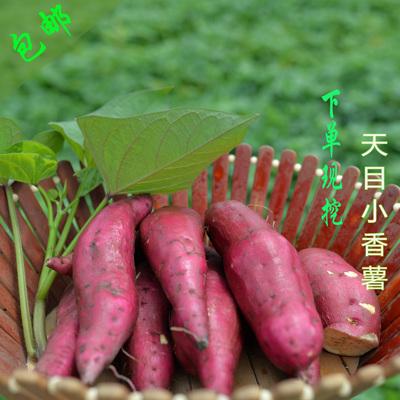 2017新鲜天目山小香薯红薯地瓜山芋黄心甜糯老人孕妇包邮2500克