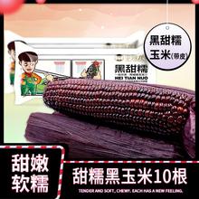 李豫龙 黑甜糯玉米新鲜 甜玉米棒黏玉米东北粘玉米粒真空袋装10根