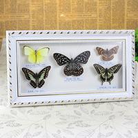 蝴蝶真标本相框17*31  立体蝴蝶 工艺品摆件  生日结婚送礼佳品