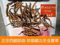 西藏特产 正宗西藏那曲冬虫夏草 藏北那曲2015新采摘 1g :1~2根