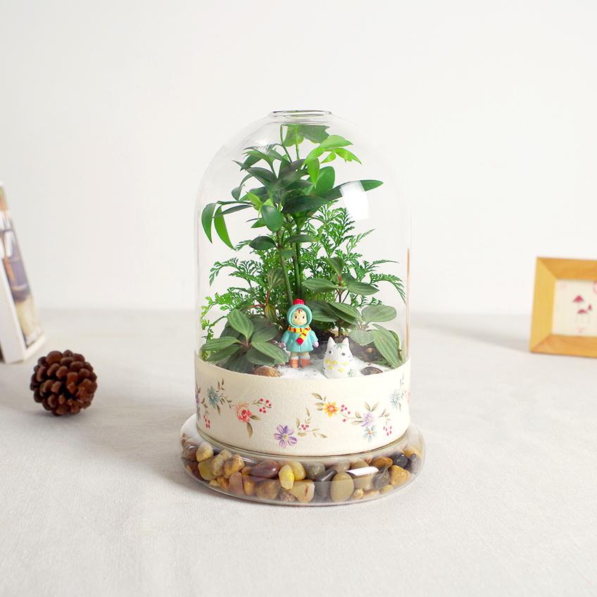 屿路绿植微景观生态瓶创意植物盆栽七夕礼物室内DIY摆件顺丰包邮