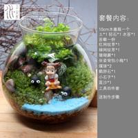 右花园苔藓微景观植物生态瓶创意玻璃瓶迷你绿植DIY摆件盆栽盆景