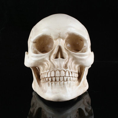Creative Toy novelty Halloween supplies horror spoof Tricky Funny whole person props resin skull decorations
