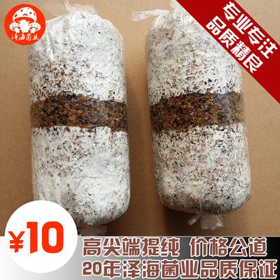 食用菌秀珍菇颗粒种袖珍菇菌种 二级种 原种栽培种枝条种