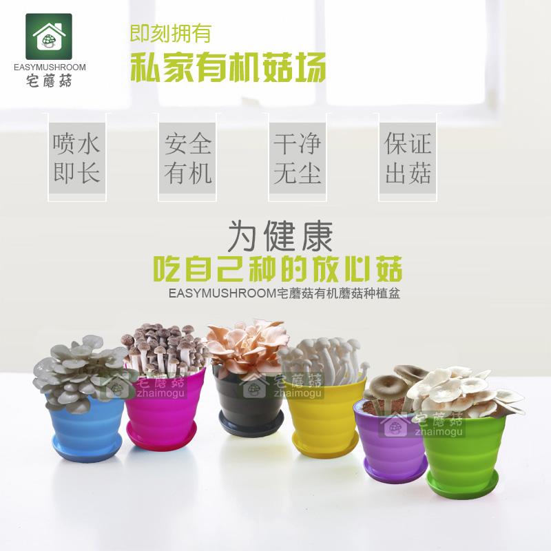 螺纹盆装系列DIY办公室内桌面创意绿色植物盆栽草娃娃微景观批发
