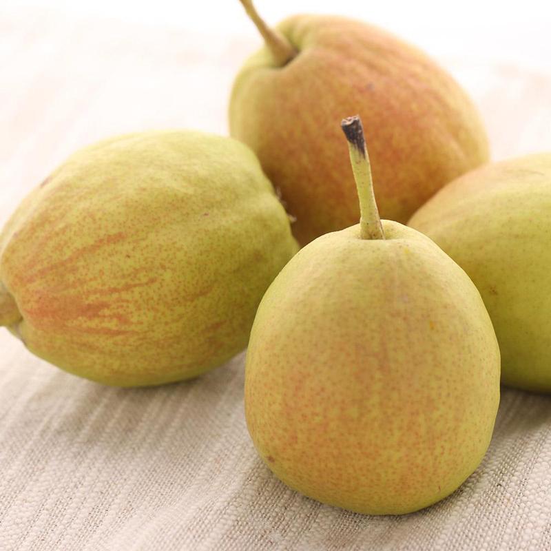 新疆库尔勒香梨新鲜水果梨子正宗特产雪花香妃梨5斤包邮大120g/个