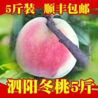 新鲜水果桃子 映霜红现摘水蜜桃5斤冬雪蜜桃毛桃非水蜜桃顺丰包邮