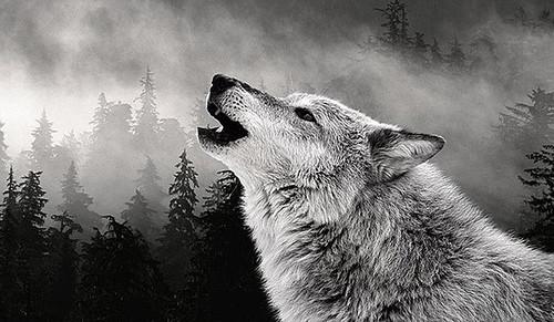 新款狼嚎冲天风景diy钻石画5d十字绣客厅沙发卧室过道