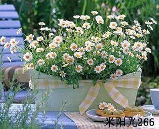 小盆栽 - 空城落日 - 空城落日的博客