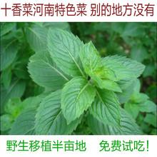 【十香菜】最新最全十香菜 产品参考信息_一淘