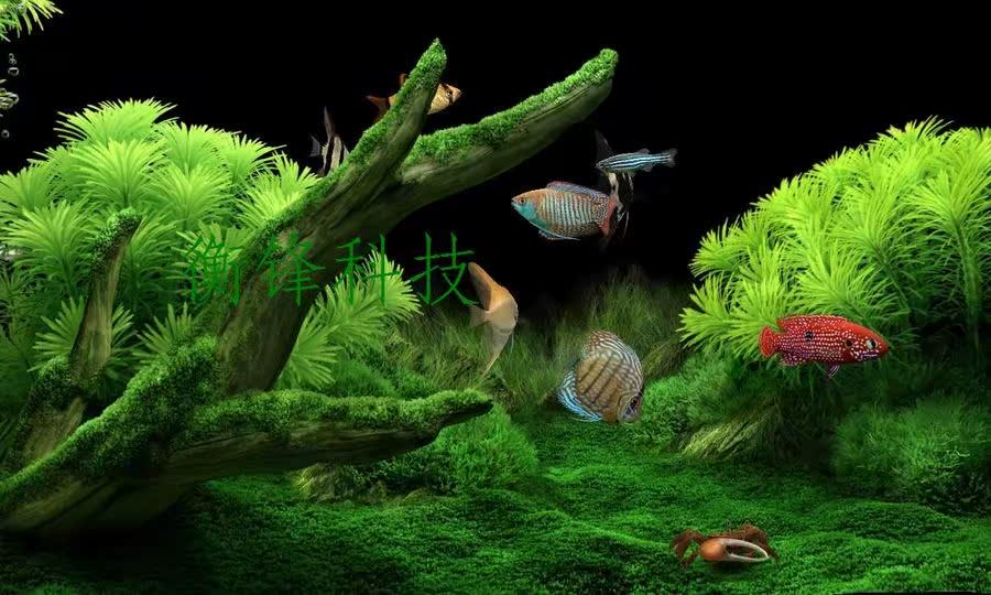 热带鱼屏保怎么喂鱼_可以逗鱼喂鱼的热带鱼屏保注册版通讯数码
